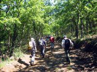 Nebrodi - Bosco di Mangalaviti